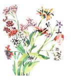 Watercolour flowers Royalty Free Stock Photography