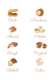 Watercolour hand painting Nuts collection Royalty Free Stock Images