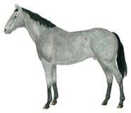Buzzard. Watercolour illustration of horse (Equus ferus caballus Royalty Free Stock Photos