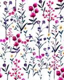 Watercolour ilustracyjny dziki kwiecisty wzór, delikatni kwiaty, Zdjęcia Stock