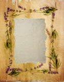 Watercolour lavender frame Stock Images