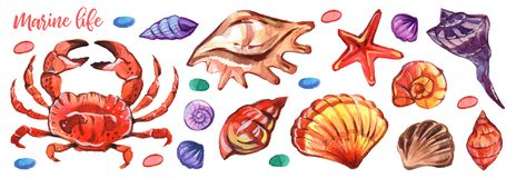 Watercolour marino en estilo realista en el fondo blanco Vida subacuática marina Blanco aislado ejemplo libre illustration