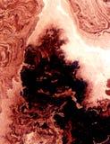 Watercolour natuurlijke fractal Stock Afbeeldingen