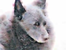 Watercolour obraz stary Schipperke pies z bliska ilustracja wektor