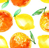 Watercolour orange and lemon fruit illustration. Royalty Free Stock Photos