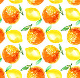 Watercolour orange and lemon fruit illustration. Stock Photos