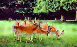 Watercolour painting. Group of Fallow deer grazing. English countryside. Watercolour painting of a small group of Fallow deer grazing in the English countryside stock photography