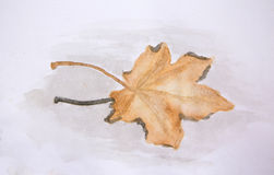 Watercolour painting of maple leaf in water Royalty Free Stock Image