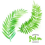 Watercolour Palm Leaves Stock Images