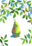 Watercolour pear Stock Images