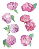 Watercolour pions blossom and rose flowers. stock illustration