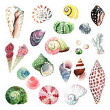 Watercolour Seashells Stock Photos