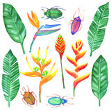Watercolour set with tropical elements Royalty Free Stock Images