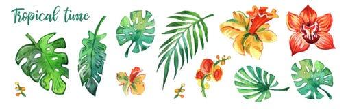 Watercolour tropical colorido das folhas e das flores no fundo branco Cópias do Watercolour Elementos da decoração imagem de stock royalty free