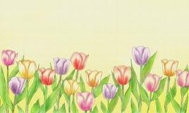 Watercolour tulipanów pustego miejsca kartka z pozdrowieniami Zdjęcie Stock