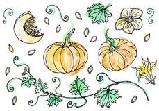 Watercolour Vegetable Pumpkin. Plant With Leaves, Flower And Seeds. Realistic Hand Drawn Illustration. Savoyar Doodle Stock Images