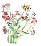 Watercolourblumen lizenzfreie abbildung