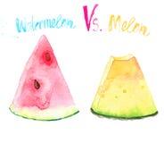 Watercolourwassermelonen- und -melonenscheiben Stockbilder