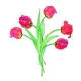 Watercoolor рисуя красные тюльпаны Стоковые Фото