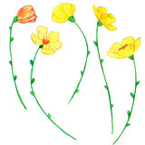 Watercoolor drawing yellow flowers Stock Image