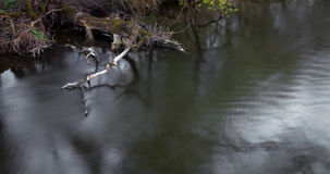 watercourse Royaltyfri Foto