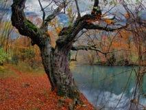 watercourse Стоковая Фотография RF