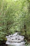 Watercourse piękno obrazy royalty free
