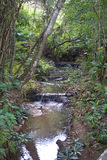 Watercourse in the rainforest Stock Photography