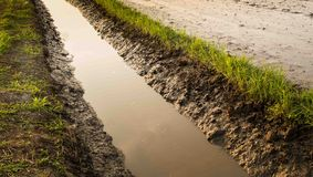 The watercourse of rice field Stock Photo