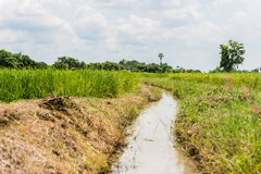 Watercourse in rice field Royalty Free Stock Photography