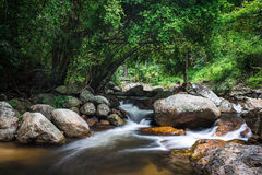 Watercourse of rocks in tropical woods Royalty Free Stock Photo