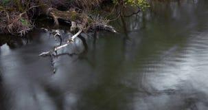 Watercourse Royalty Free Stock Photo