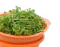 The watercress Royalty Free Stock Photos