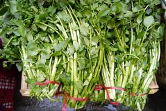 watercress Arkivfoton