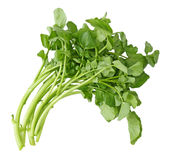 watercress Arkivbild