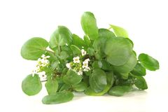 Watercress stock photography