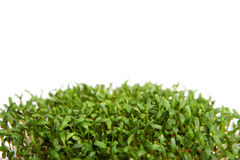 Watercress Foto de Stock Royalty Free