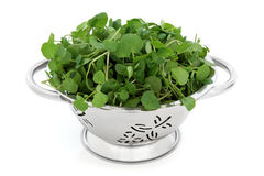 watercress Obrazy Royalty Free