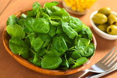 Watercress Royalty Free Stock Photos