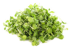 Watercress Royalty Free Stock Photo