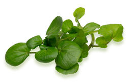 Watercress Zdjęcia Royalty Free