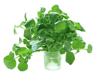 Watercress Stock Images