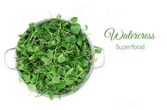 Watercress in bowl on white background. Top view. Royalty Free Stock Photography