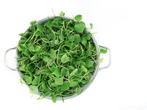 Watercress in bowl on white background. Top view. Stock Image