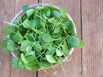 Watercress in bowl on wooden background stock photo