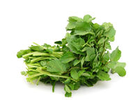 A watercress bunch Stock Photo