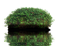 Watercress Royalty Free Stock Image
