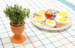 Watercress in eggshell and halves of eggs on colorful plate Stock Photo