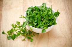 Watercress fresco Fotografia de Stock