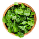 Watercress In Wooden Bowl Over White Stock Photography
